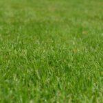 Graszoden bestellen voor een snel groen gazon